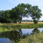 arching-riverside-trees-reflected-1427682-m