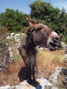 donkey-937789-m