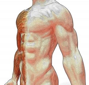 anatomy-1349598-m