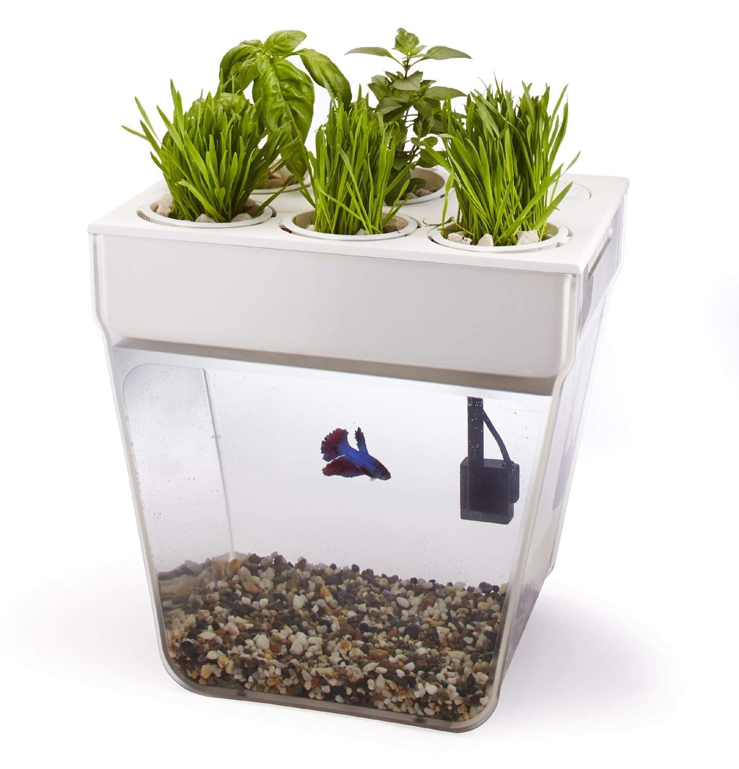 Aquarium fish tank starter kit - Aquaponics Starter Kit