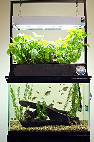 starting aquaponics